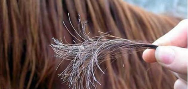صورة علاج تقصف الشعر الشديد , تلف الشعر اسبابه وعلاجه