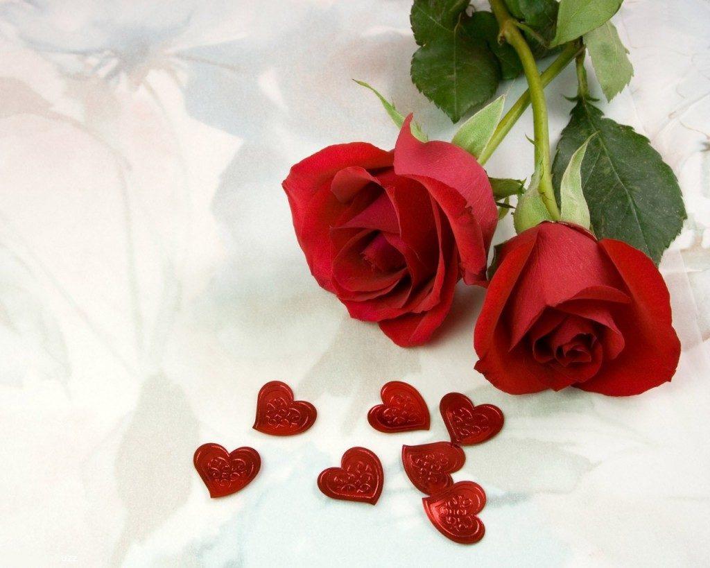 صور اجمل ورد احمر , جمال الورود و اروع انواع الورد الاحمر