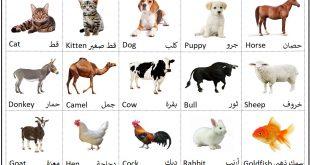 اسماء الحيوانات باللغة الانجليزية , تعرف على معاني الحيوانات بالانجليزي