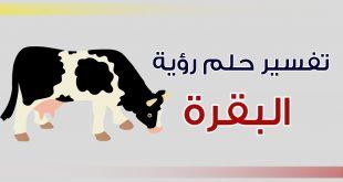 رؤية البقرة في المنام , راي مفسرو الاحلام بالنسبه لمنام البقره