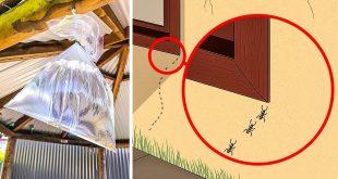 كيف اقضي على البق , تخلصي من حشرات الفراش