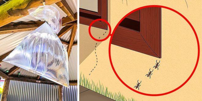 صور كيف اقضي على البق , تخلصي من حشرات الفراش