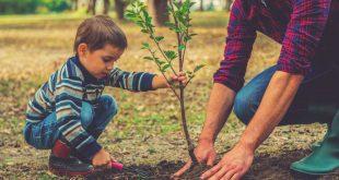 صور تفسير حلم غرس شجرة , رؤيه زراعه الاشجار في المنام