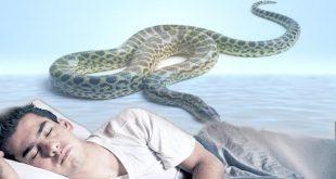 في المنام لدغة الافعى , تفسير الحلم بقرصه الثعبان
