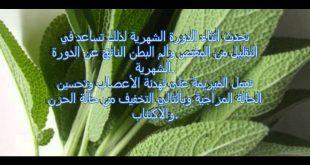صور فوائد عشبة الميرمية , تمتع بصحة ممتازة مع نبات الميرمية