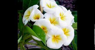 صورة انواع الورود مع الصور , اجمل انواع الورود الطبيعية