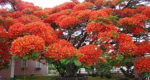 صورة انواع الاشجار وفوائدها , هل تعرف اهمية الاشجار وفوائدها