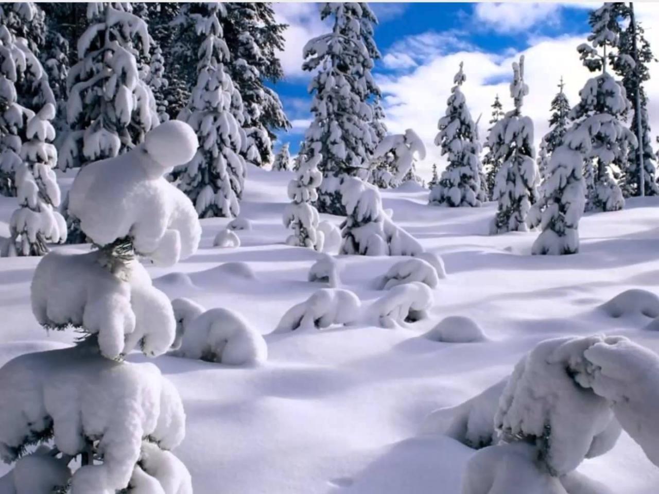 صورة صور عن البرد , البرد وصوره واختلاف الشعور بالبرد