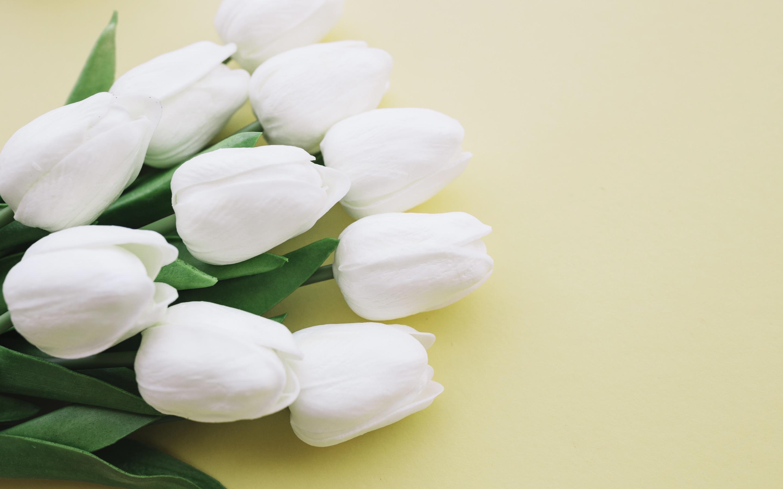 صورة خلفيات زهور بيضاء , من اروع وارق الخلفيات زهور البيضاء