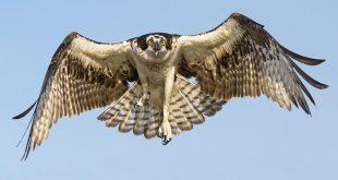 صورة صور طيور حره , اروع الطيور الحرة