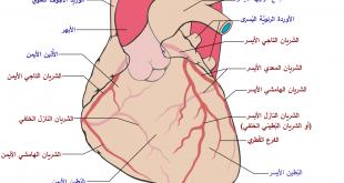 صورة اسباب رفة القلب , ما هى اسباب رفة القلب