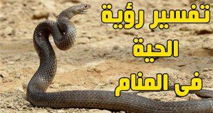 صورة تفسير حلم ذبح الحيه , ما تفسير قتل الثعبان الاسود في المنام