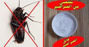 صورة التخلص من الصراصير , طريقة سحرية وسرعة للتخلص من الحشرات خاصة الصراصير