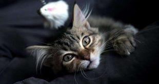 صورة اعراض موت القطط , وصف شامل وموضح عن هذا المقال