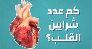 صورة موضوع عن القلب , ما هي وظيفة القلب في جسم الانسان