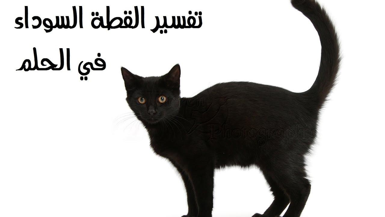صورة تفسير القطه في الحلم , سر رؤيه القطه فى المنام