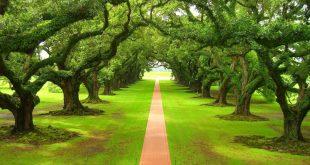 صورة صور اشجار طبيعية , احلي واجدد صور للاشجار وطبيعتها الجذابة