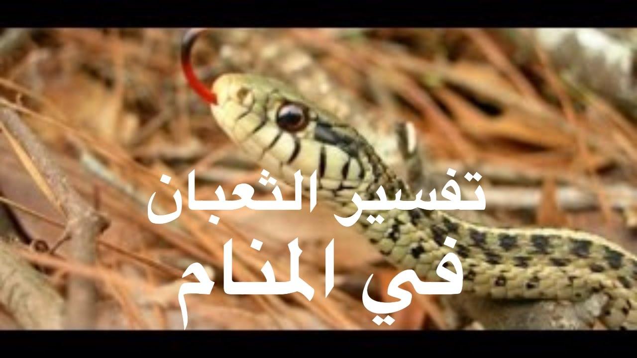صورة معنى الثعبان في المنام , نوع حلمك وتفسيره هتلاقيه هنا