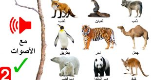 اجمل انواع الحيوانات حول العالم , اشكال الحيوانات واسمائها