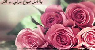 صورة صباح الورد حبيبي , احلي صباح علي احلي حبيب