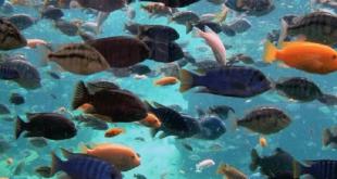 صورة السمك في المنام من التفسيرات الجيدة شاهدها , تفسير الاحلام صيد السمك