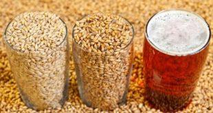صورة من اليوم اشرب الشعير لفوائده الجبارة , ما فائدة الشعير