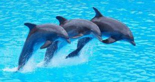 صورة حقائق جديدة مذهلة عن الدولفين , هل الدلفين من الثدييات