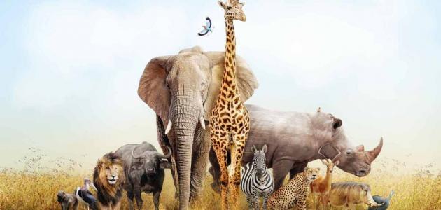 صورة ماذا تعرف عن الحيوانات البرية , معلومات عن الحيوانات البرية 793 1