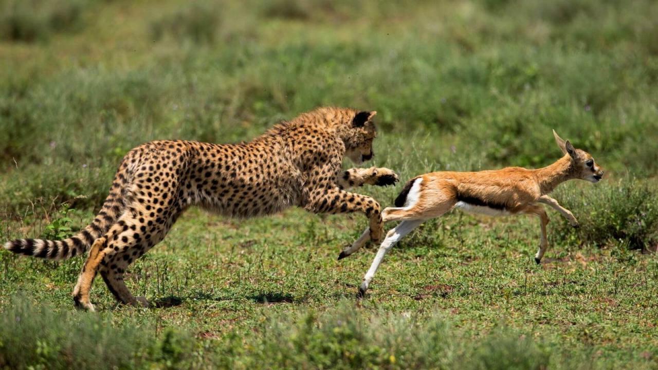 صورة ماذا تعرف عن الحيوانات البرية , معلومات عن الحيوانات البرية 793 2