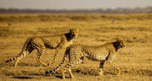 صورة ماذا تعرف عن الحيوانات البرية , معلومات عن الحيوانات البرية